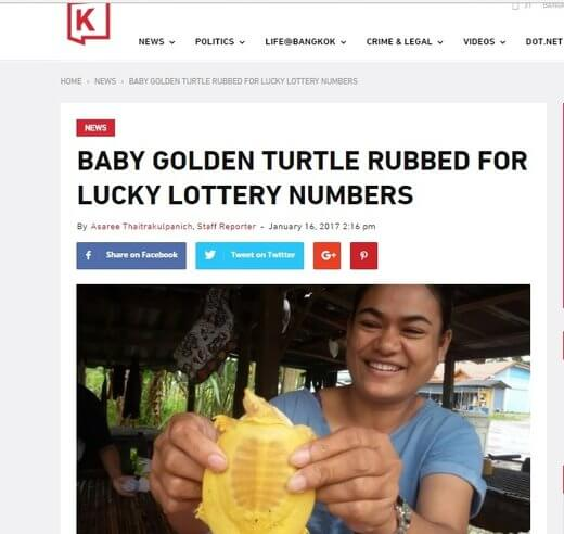 Can golden turtle help you win the lottery?